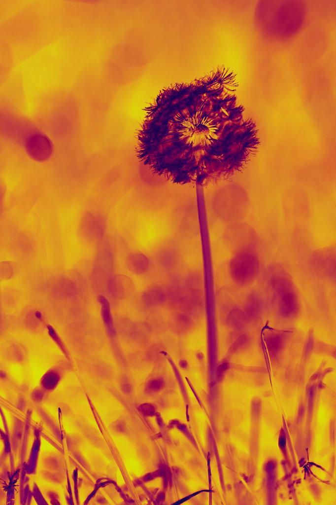 20110504-Mai-002-Bearbeitet.jpg